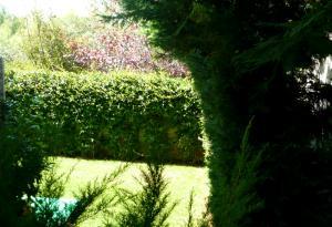 Κήπος στην Πολιτεία
