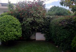 Κήπος στο Χαλάνδρι