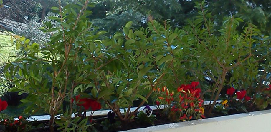 Ικανοποιούμε όλες τις ανάγκες κάθε κήπου στην περιοχή του Ψυχικού