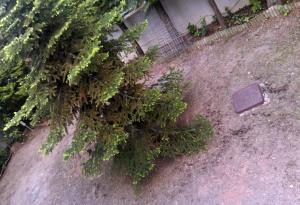 Πριν τη διαμόρφωση του κήπου